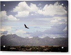 Hawk - 2013-242 Acrylic Print by Judi FitzPatrick