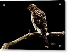 Hawk -  2950 - F Acrylic Print by James Ahn