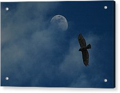 Hawk And Moon Coming Out Of The Mist Acrylic Print by Raymond Salani III