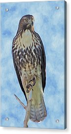 Hawk By Frank Lee Hawkins Acrylic Print