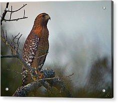 Hawk In The Mist Acrylic Print