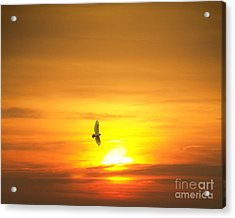 Hawk Into The Sunset Acrylic Print