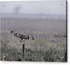 Hawk Landing Acrylic Print