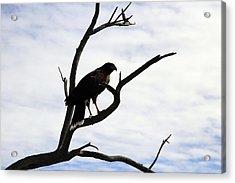Hawk Silhouette 2 Acrylic Print