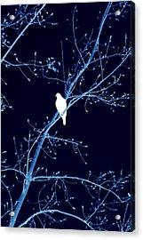 Hawk Silhouette On Blue Acrylic Print