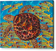 Hawksbill Sea  Turtle And  Snappers Acrylic Print