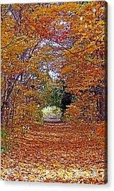 Hawthorn Hollow Acrylic Print