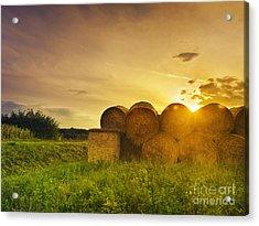 Hay Bales Acrylic Print by Jelena Jovanovic