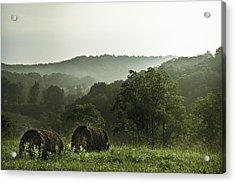 Hay Bales Acrylic Print by Shane Holsclaw