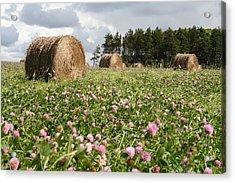 Hay Field Acrylic Print