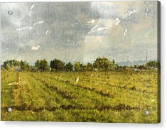 Hay Fields In September Acrylic Print by Brett Pfister