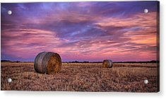 Hayseed Acrylic Print by Thomas Zimmerman