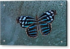 Hdr Butterfly Acrylic Print