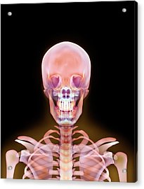 Head And Shoulders Acrylic Print