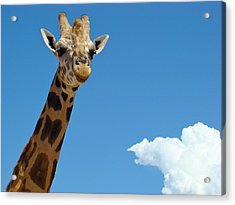 Acrylic Print featuring the photograph Head In The Clouds by Paul Foutz