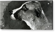 Head Of A Dog With Short Ears Acrylic Print by Henri de Toulouse-Lautrec
