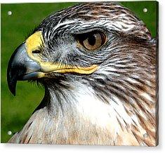 Head Portrait Of A Eagle Acrylic Print