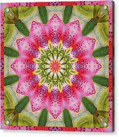Healing Mandala 25 Acrylic Print by Bell And Todd
