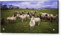Acrylic Print featuring the photograph Hear My Voise by Jaki Miller