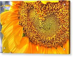 Heart-felt Sunflower Acrylic Print