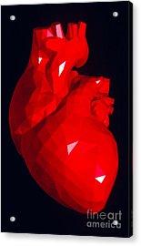 Heart Model Acrylic Print