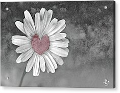 Heart Of A Daisy Acrylic Print