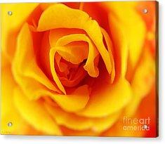 Heart Of A Rose Acrylic Print by Ella Kaye Dickey