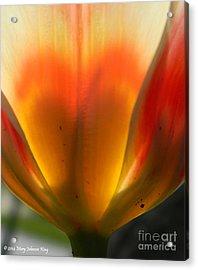 Heart Of A Tulip Acrylic Print