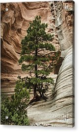 Heart Of The Canyon Acrylic Print by Terry Rowe