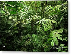 Heart Of The Rain Forest - Costa Rica Acrylic Print by Matt Tilghman