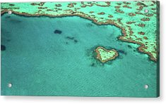 Heart Reef Acrylic Print by Kokkai Ng