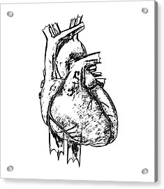 Heart Acrylic Print by Russell Kightley