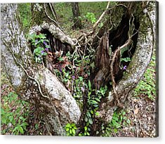 Acrylic Print featuring the photograph Heart-shaped Tree by Jan Dappen