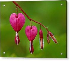 Heart String Acrylic Print