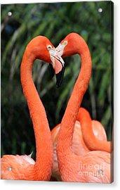 Heart To Heart Flamingo's Acrylic Print