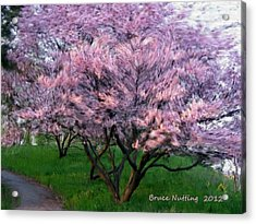 Acrylic Print featuring the painting Heartfelt Cherry Blossoms by Bruce Nutting