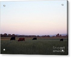 Acrylic Print featuring the photograph The Kittitas Valley I by Susan Parish