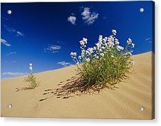 Hearty Wild Stock Wildflowers Growing Acrylic Print by Jason Edwards