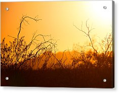 Acrylic Print featuring the photograph Heat Of The Day by Brad Brizek
