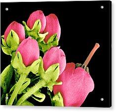 Heath Flowers Acrylic Print by Susumu Nishinaga