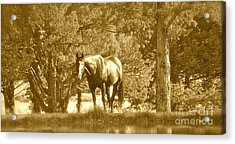 Acrylic Print featuring the photograph Heaven On Earth by Barbara Dudley