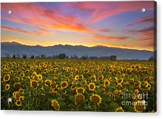 Heaven Acrylic Print by Rima Biswas