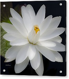 Heavenly Aquatic Bloom Acrylic Print