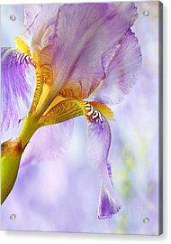 Heavenly Iris 2 Acrylic Print by Theresa Tahara