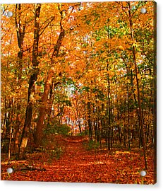 Heavenly Pathway Acrylic Print by James Hammen