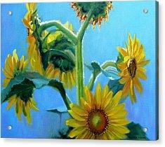 Heavenly Sunlight-sunflowers In Sunlight Acrylic Print by Bonnie Mason