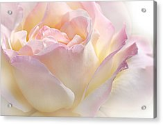 Heaven's Pink Rose Flower Acrylic Print by Jennie Marie Schell