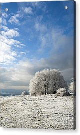 Heavy Frost Acrylic Print by Anne Gilbert