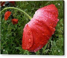 Heavy Head Poppy Acrylic Print