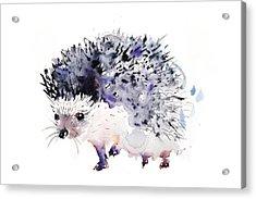 Hedgehog Acrylic Print by Krista Bros